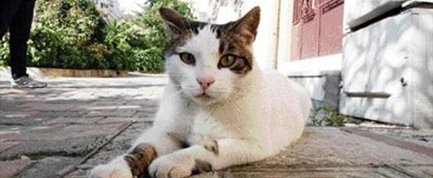 #kedibabalari sokak kedileri için seferber oluyor