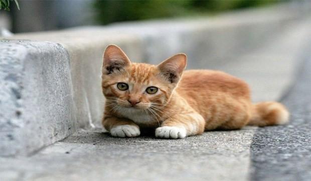 'Burada görmeyeceğim' dediği kedi ölü bulundu, kampanya başlatıldı