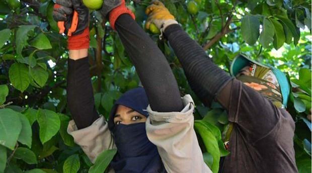 Göçmen işçi ölümleri giderek artıyor