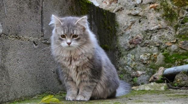 Sokak kedilerini besleyen komşusunu Başbakanlığa şikâyet etti