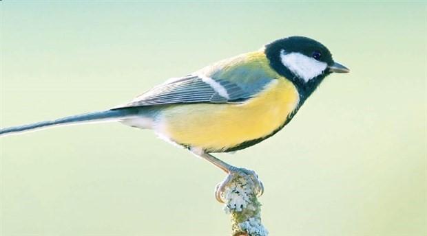 Kuşlar komşularının karakterine dikkat ediyor