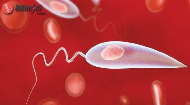 Vücudumuzdaki parazitler aslında bizi koruyor mu?