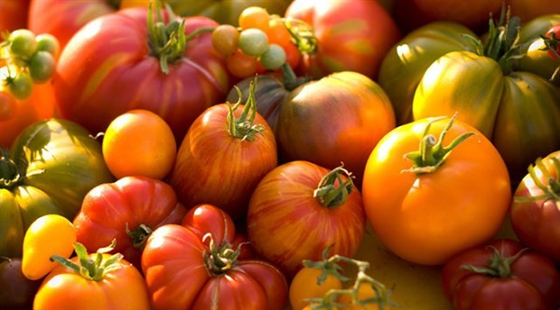 Russia submitted to import tomato from Turkey in 2018