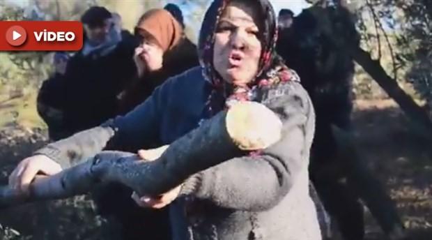 Amasralı yurttaşlar zeytin kıyımına isyan etti