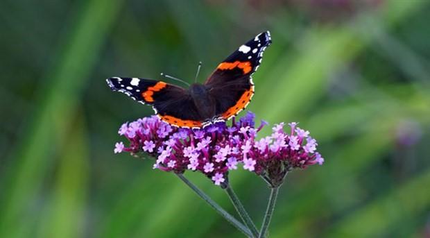 Kelebekler 200 milyon yıl önce de vardı