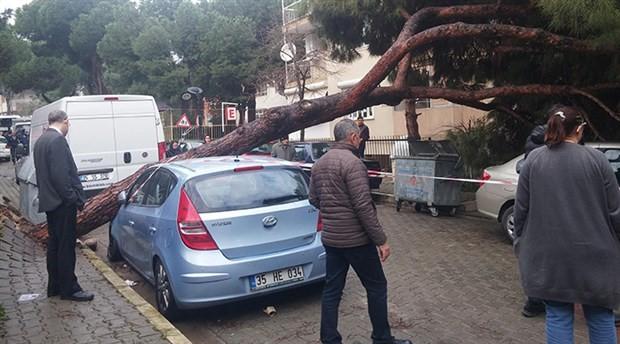 Çam ağacı, park halindeki 2 otomobilin üzerine devrildi