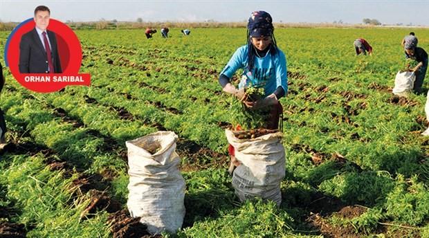 Piyasa çokuluslu şirketlerlerde yerel tohum ise engelleniyor