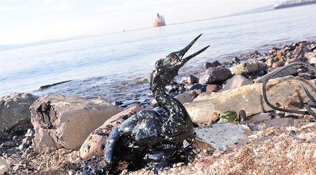 Körfez kirlilikle boğuşuyor: Eski haline dönmesi zor