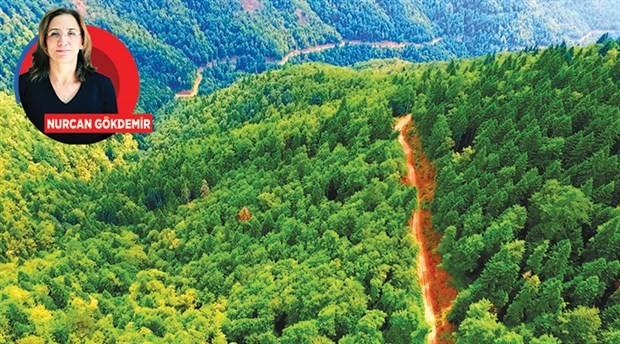Ormanın altı üstü yağmalanacak!