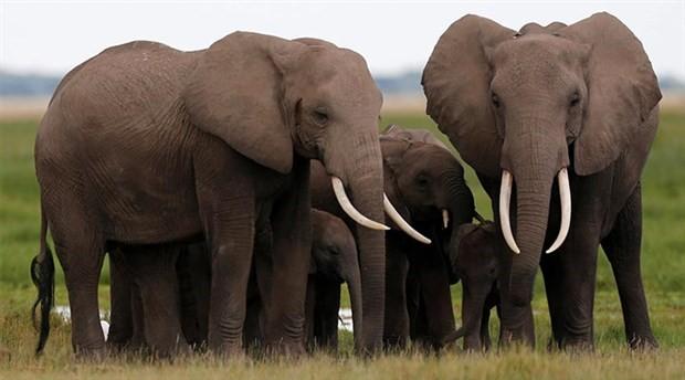 Bilim insanları hayvanların birbiriyle sürekli konuştuklarını gözlemledi