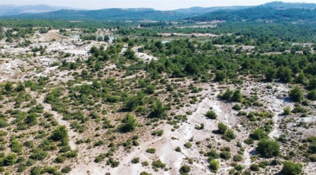 Fosil ağaç ormanı yok olma tehlikesiyle karşı karşıya