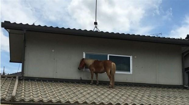 Sel felaketinden kaçan at çatıya sığındı