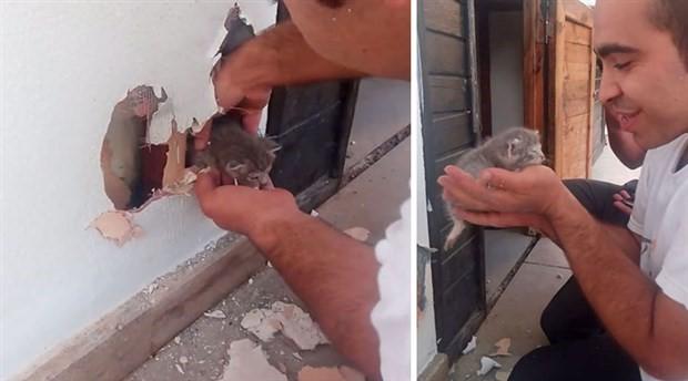 Otel duvarına sıkışan bebek kedi, duvar kırılarak kurtarıldı