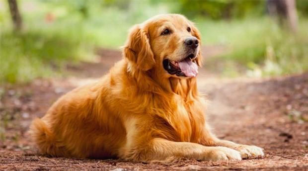 Köpekler her duygumuza ortak