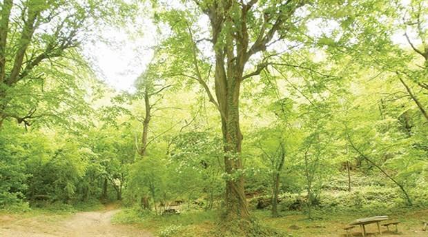 'Takas' usulü orman kıyımı