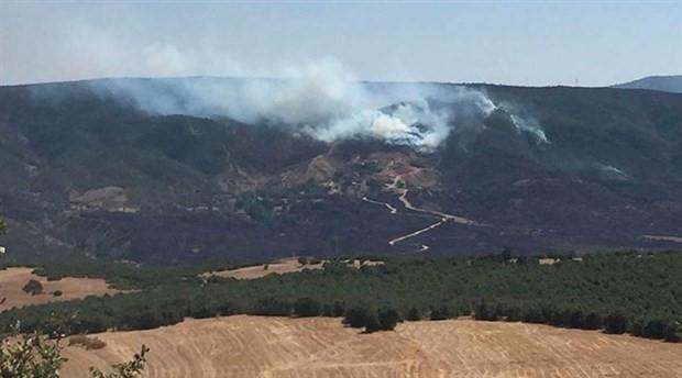 Bingöl'deki orman yangınları söndürüldü