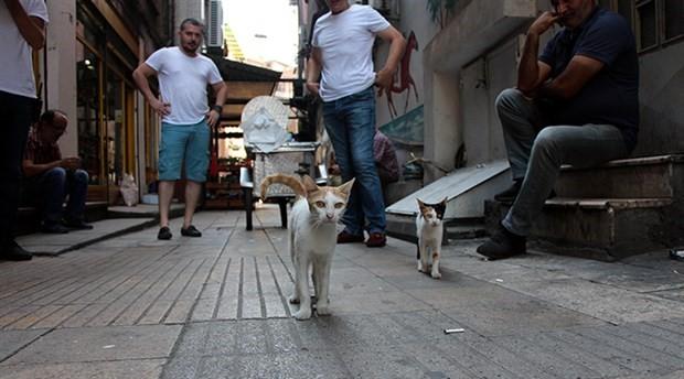 İşkence edilen kedi Ayşe, tedavisinin ardından sokağa geri döndü