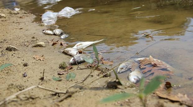 Kütahya'da toplu balık ölümleri