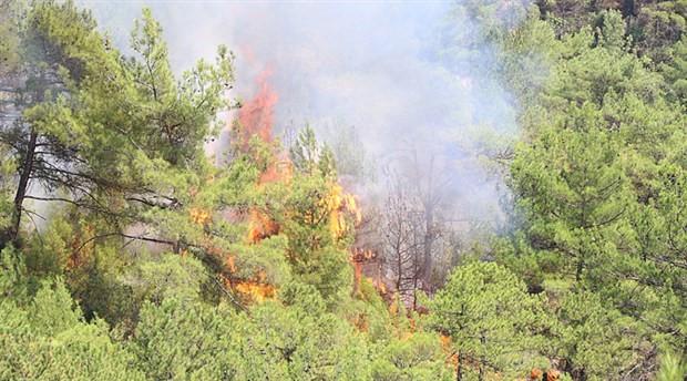 Karabük Merkez Çamlık Tabiat Parkı'nda yangın