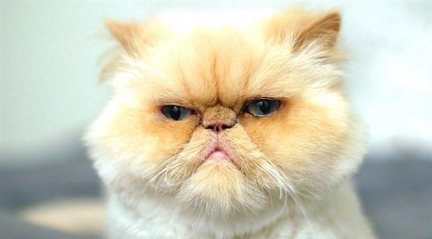 Yeni Zelanda'nın bir köyünde, evde kedi beslemek yasaklanıyor