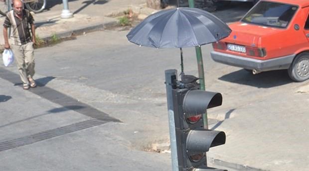 Direğe yuva yapan kumruya şemsiyeyle koruma