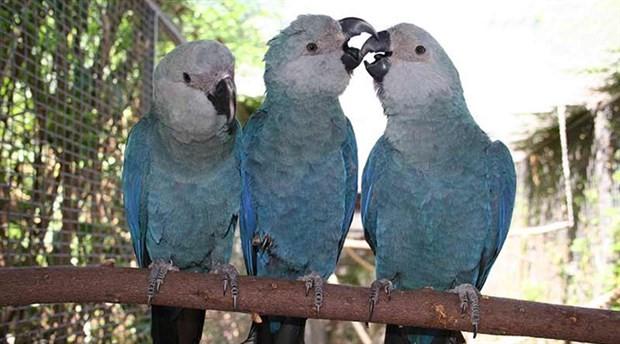8 kuş türünün daha soyu tükendi