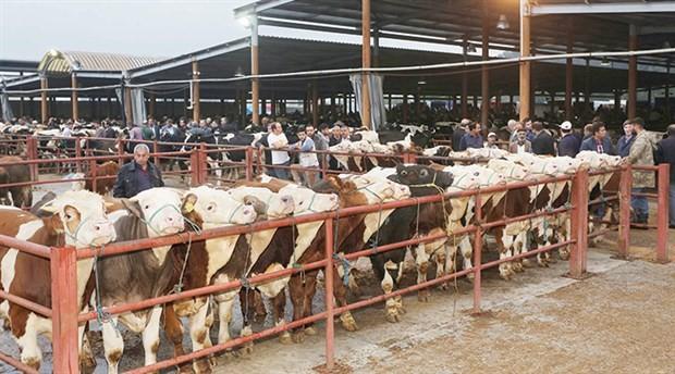 Canlı hayvan ticareti yasaklansın