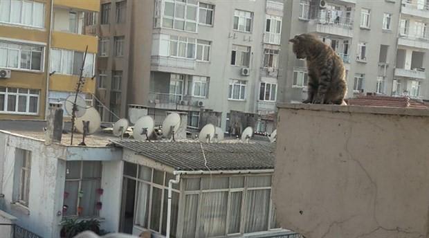 Apartmanın çatısındaki kedi 25 günün sonunda kurtarıldı