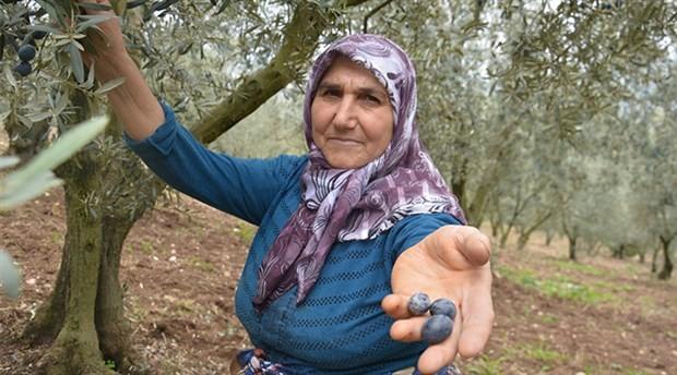 Zeytincilerden taban fiyatı tepkisi