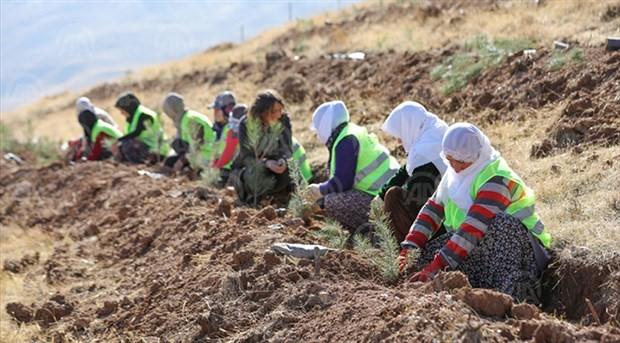 Kadınlar, Artos Dağı'nda ağaçlandırma çalışması yapıyor