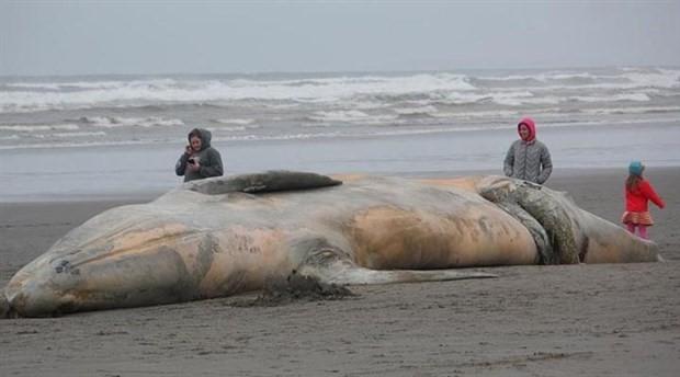 Sahile vuran cansız balinanın midesinden 6 kilo çöp çıktı