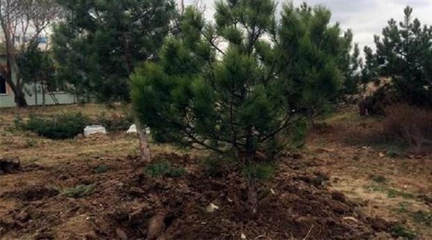 Cami inşaatı için ağaçlar söküldü
