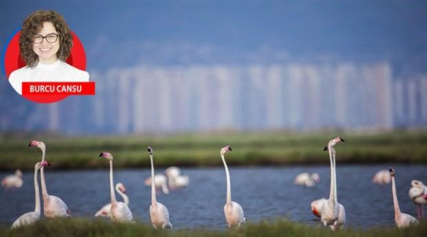 Flamingolar için  müjdeli haber