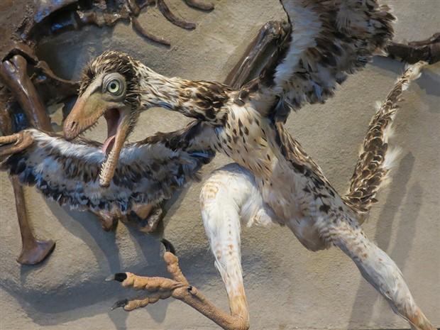 Çin'de 110 milyon yıllık kuş fosili bulundu