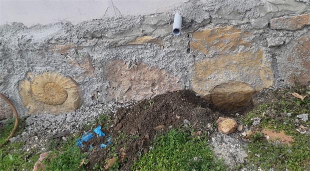 Adıyaman'da bir evin duvarında dev salyangoz fosili bulundu
