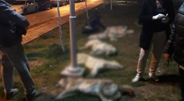 Köpek katillerinin serbest bırakılmasına yapılan itiraz reddedildi