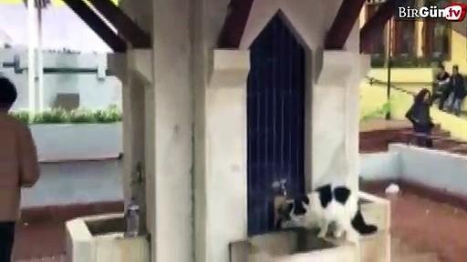 Şadırvandan su içen kedi ilgi odağı oldu