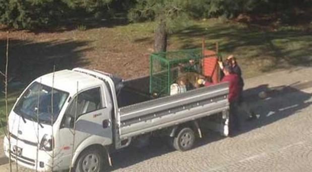 'Koç Üniversitesi'nde hayvanlar kampüsten atılıyor' iddiası