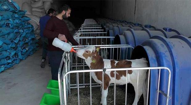 Yeme yüzde 10 zam: Süt krizi kapıda