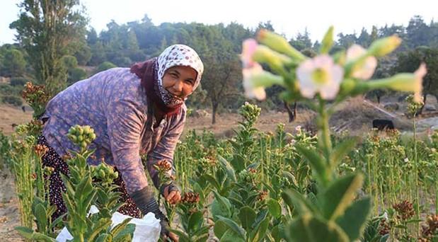 7 başlıkta tarımda iflas