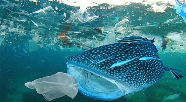 Türkiye neden plastik atık ithal ediyor?