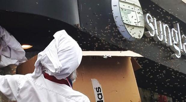 İstiklal Caddesi'nde arı paniği