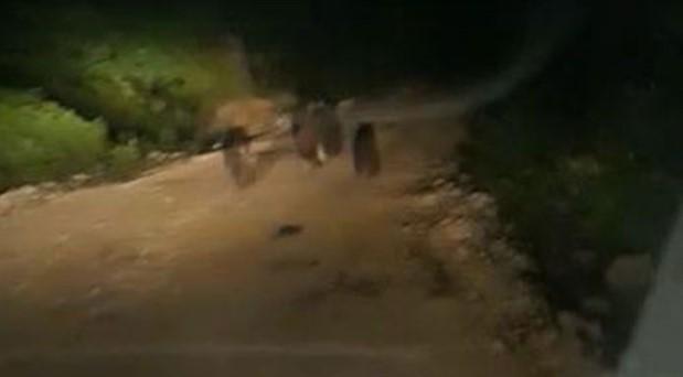 Bartın'da anne ayı, üzerilerine gelen araca saldırdı
