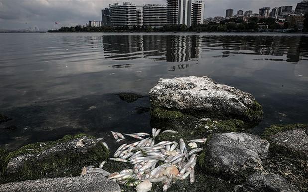Küçükçekmece Gölü alarm veriyor