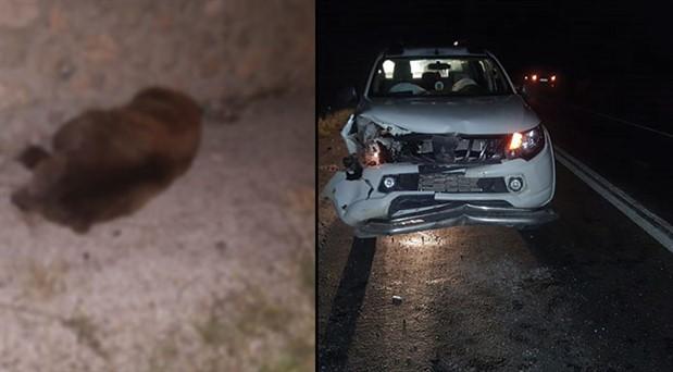 Hafif ticari aracın çarptığı ayı yaşamını yitirdi