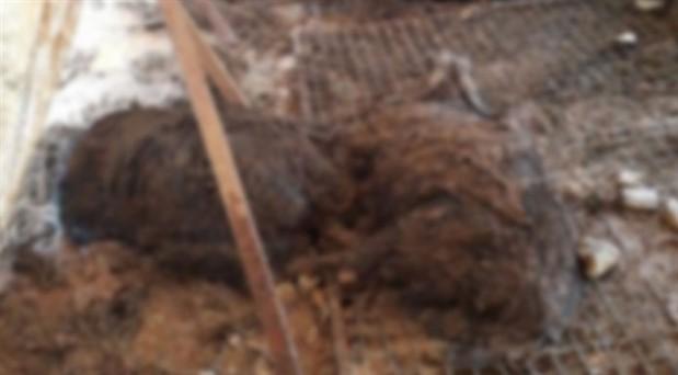 Elmalı'daki selde 11 hayvan yaşamını yitirdi