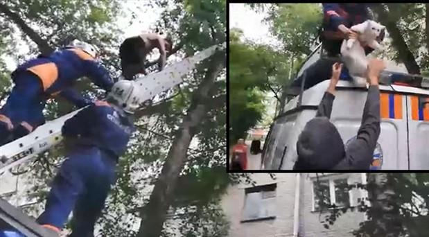 Kediyi kurtarmaya çıktığı ağaçta mahsur kaldı