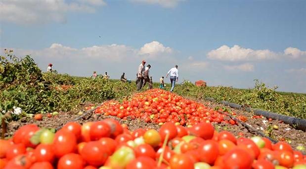 Türkiye tarımda neden ithalata bağımlı hale geldi?