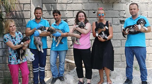Konak'ta sokak hayvanları emin ellerde