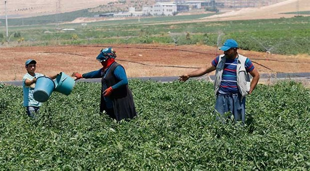 40 derece sıcakta ekmek mücadelesi